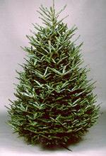 tree pix
